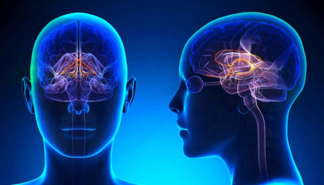سیستم لیمبیک مغز